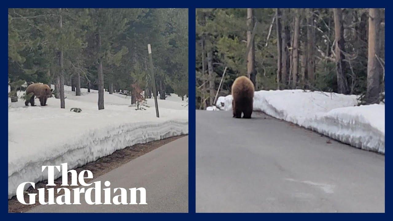 joggeur rencontre ours égaré