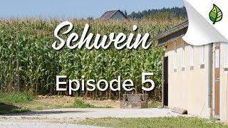 SCHWEIN (5/8) - Fütterung
