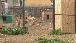 В Волгограде приют для животных будет развиваться на средства гранта