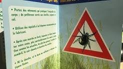 Virus à tiques : pourquoi une vaccination recommandée en Suisse et pas en Franche-Comté ?