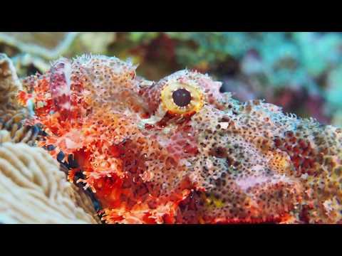 Diving in Red Sea - Egypt - September 2017