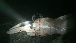 When This Giant Sea Creature Washed Ashore, Locals Were So Alarmed, They Called In The Government