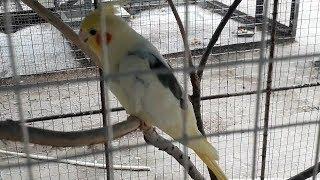 10 Burung Langka di Aceh