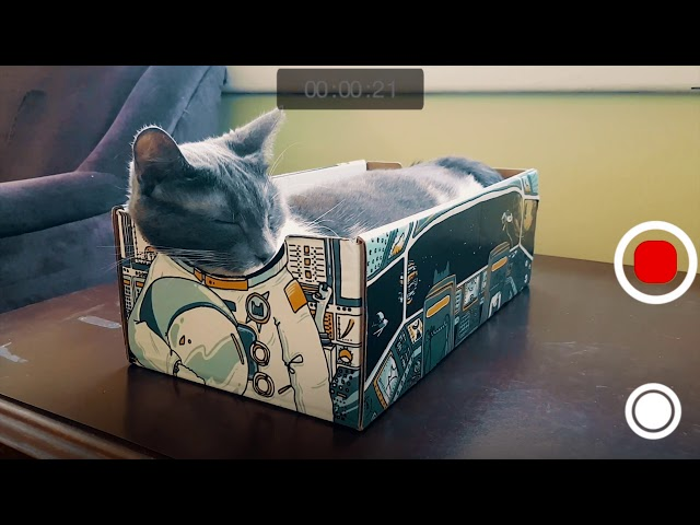 CATBOX – The purrfect box for your cat…and you!