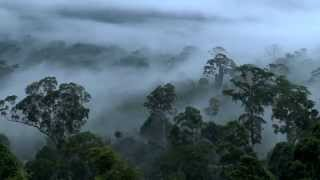 Beautiful HD Video Footage from Maliau Basin - Sabah's Lost World