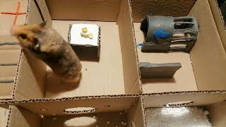 🐹Hamster escapes the awesome maze for Pets in real life- Pool Maze for Hamster- Rainbow Pyramid Maze