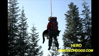 Search & Rescue (SAR) Dog Training
