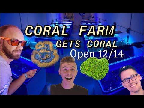 CORAL ADDED to the FARM   OSA Aquaculture