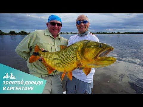 Ловля золотого дорадо в Аргентине