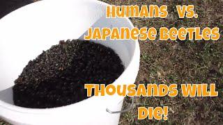 Thousands Will Die! Humans Vs. Japanese Beetles