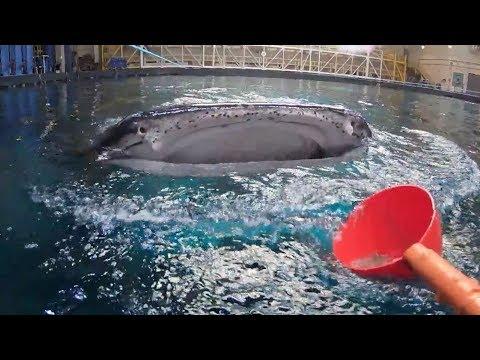 360 View of Feeding Whale Sharks at Georgia Aquarium!