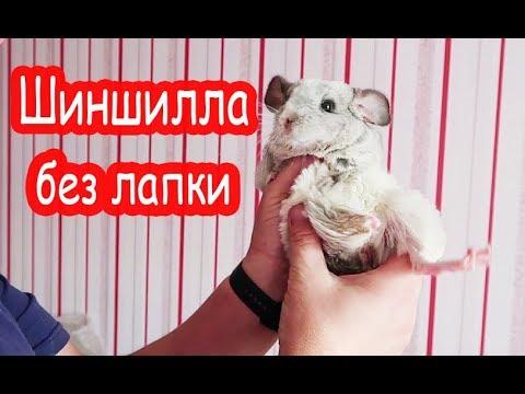 БОЛЬШАЯ уборка у свинок, шиншилл и кролика