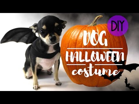 DOG HALLOWEEN EASY COSTUME | DIY