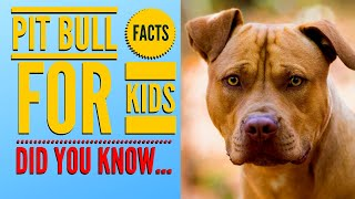 The American PIT BULL Terrier  Facts & Myths    All About Pit Bull Terriers