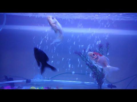 SMALL FISH AQUARIUM FOR MY ROOM. FIRST EXPERIENCE... DEKHTE HAI KYA HOTA HAI..