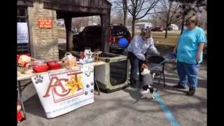 Dog Diggity Easter Egg Hunt 2013 - Muncie Pet Sitter