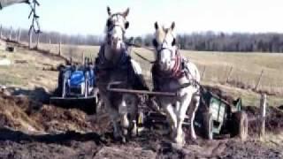 Travail à la ferme, étandage de fumier