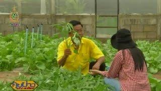 เกษตรสร้างชาติ : ปลูกผักครึ่งไร่สร้างเงินหลักแสน | สำนักข่าวไทย อสมท