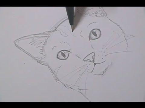 Tutorial Como Desenhar Gatos How To Draw Cats Youtube