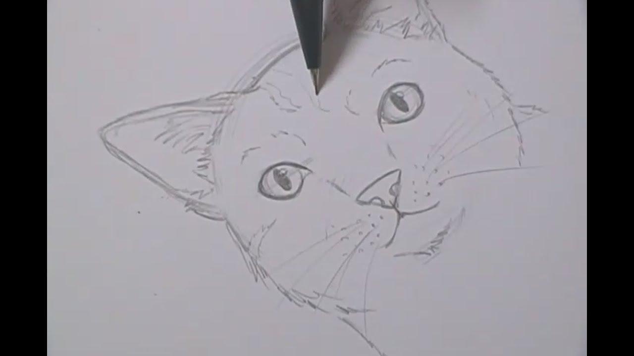 Tutorial Como Desenhar Gatos How To Draw Cats
