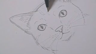 Tutorial - Como desenhar gatos / How to draw cats