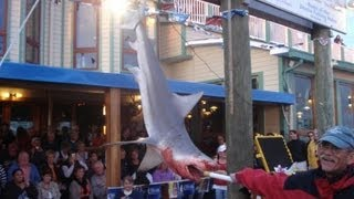 Big Bull Shark Destin Deep Sea Offshore Fishing Rodeo Shark Saturday winning shark