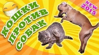 Кошки против собак ● Приколы с животными 2015 ● Cats and Dogs ● Finny vine compilation 2015