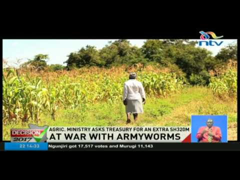 At war with Armyworms: Ministry of Agriculture asks treasury for an extra Sh320m