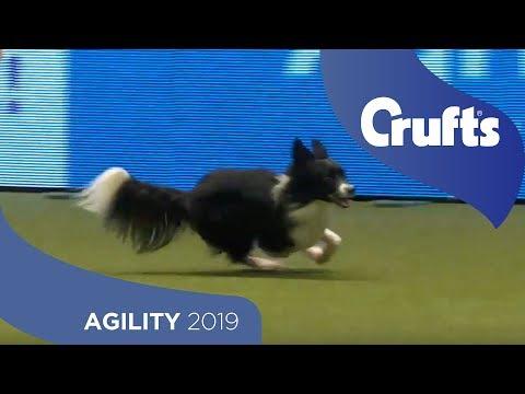 Agility Championship Round 2 – Agility - Medium | Crufts 2019