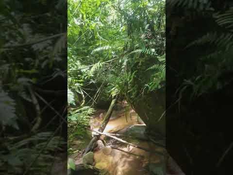 Jungle near Samaipata, Bolivia