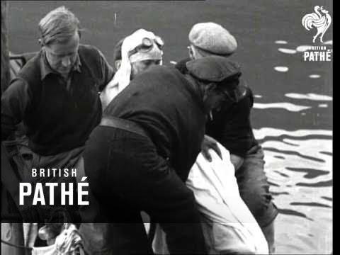 British Success In Channel Swim (1950)