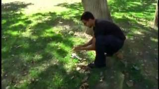 David Blaine - Dead Bird