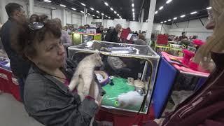 Продажа-выставка котят в Сокольниках