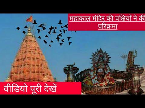 Video - महाशिवरात्रि पर बाबा महाकाल के मंदिर की पक्षियों ने परिक्रमा की आप भी देखे पूरी वीडियो देखें और अगर अच्छी लगे तो चैनल को suscribe जरूर करना   हर हर महादेव  https://youtu.be/EhSWiorKC4A