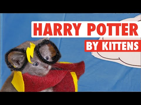 Adorable Kittens Act Out Every Single 'Harry Potter' Movie