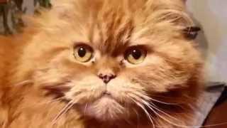КОШКИ-МЫШКИ Мотя, ты настоящий Кот!  12+