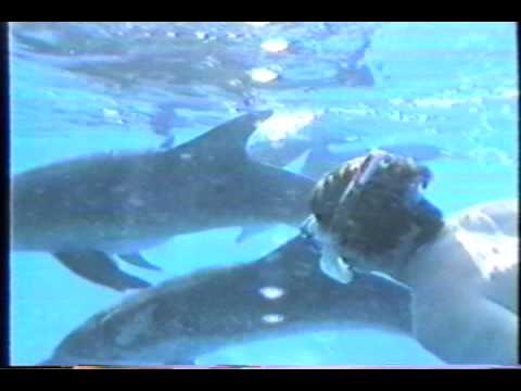 Wild Dolphin Project Expedition Produced By Patxi Pastor Grand Bahama Bank 1983