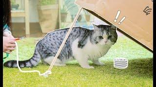 偷猫教学:天天喊着要来我家偷猫的人,你倒是来学一下怎么偷呀?
