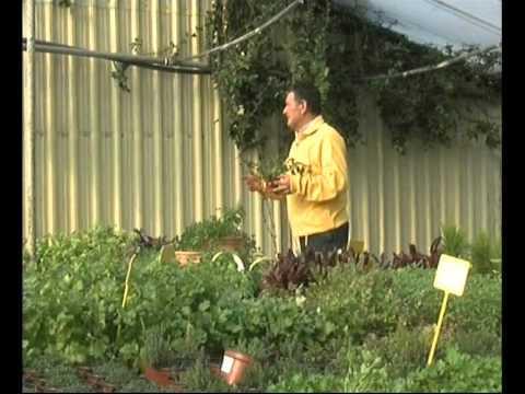 El jardinero en casa c tricos doovi - El jardinero en casa ...
