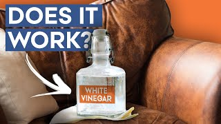 6 Quick, Easy Ways to Remove Bad Smells from Leather | How to remove bad odor from leather Sofa