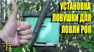 Установка ловушки для ловли роя. Ловля роев или пчелы бесплатно. Часть 2 #рои #ловушка #пчелы