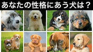 今回はあなたの普段の考えや性格からピッタリ合う種類の犬を探す心理テ...