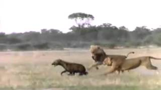 Leão Vs. Hiena