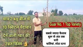 ग्वार की सबसे उम्दा किस्म👍मात्र 2kg बीज से 10 क्विन्टल पैदावार | Guar Ki Top High Yield Variety