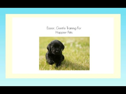 Potty Training A Black Lab Puppy | Tips For House Training Your Black Lab