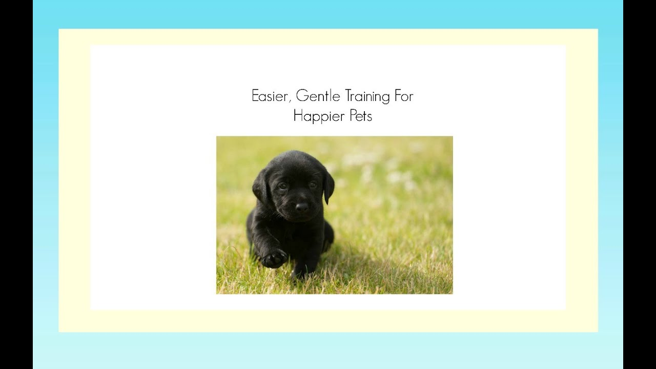 how to potty train a lab puppy video