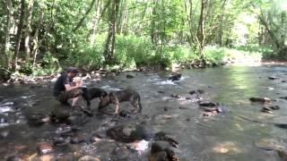 Devon & Cornwall Police Dogs In Training Make A Splash!