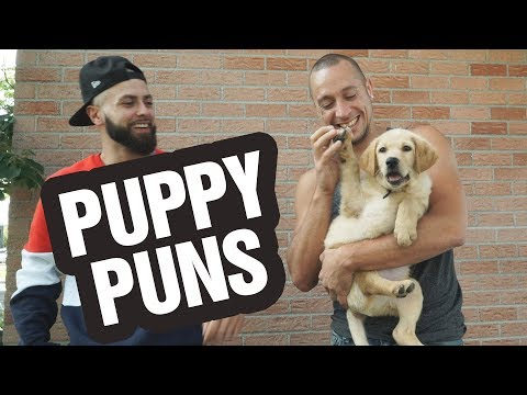 Puppies, Kittens and Puns!