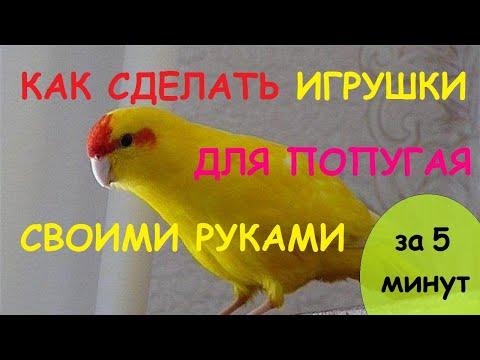 Как сделать Игрушки для попугая своими руками. Лабиринт-погрызушки из тубусов от туалетной бумаги