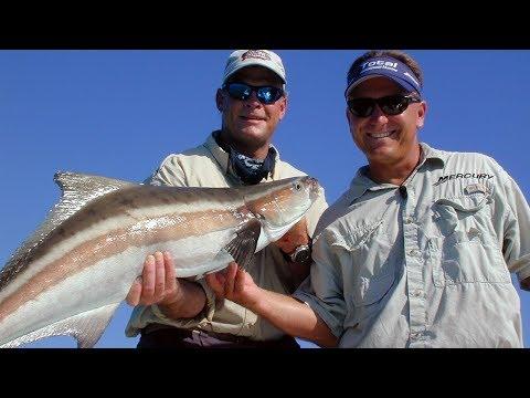 Chokoloskee cobia key largo amberjack bull shark fishing for Chokoloskee fishing report